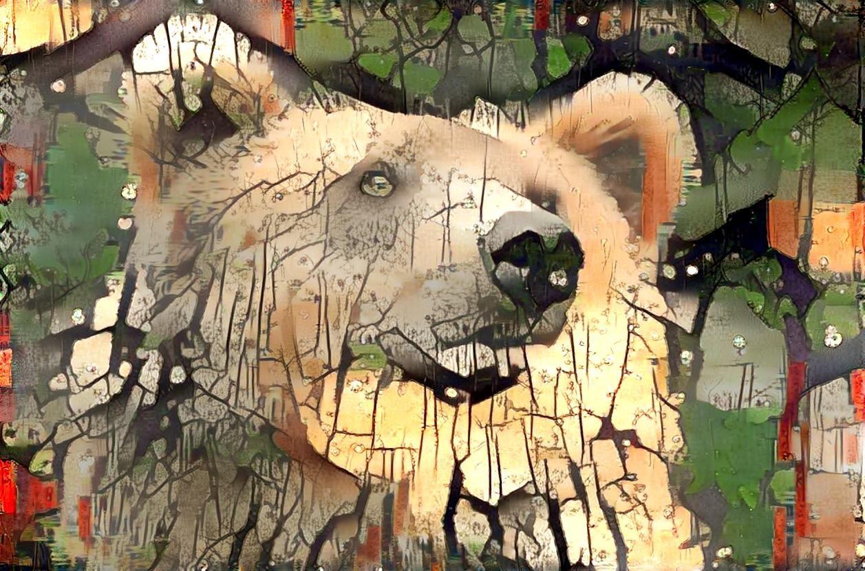 Bear_4430