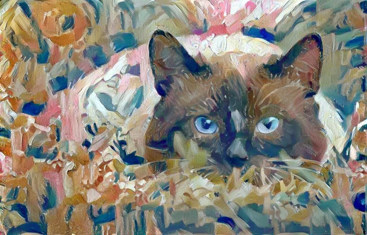 Cat_4459