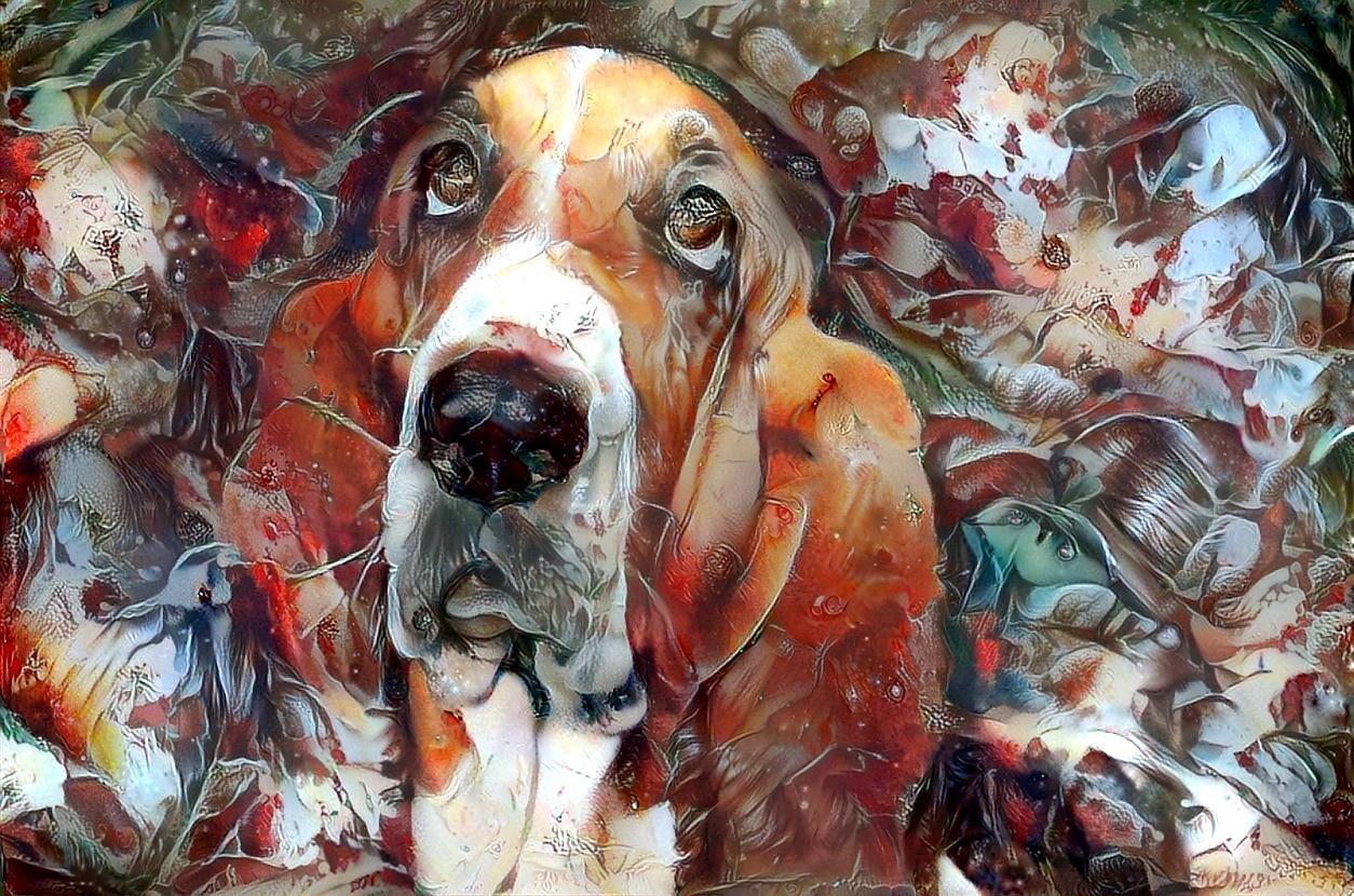 Dog_4466