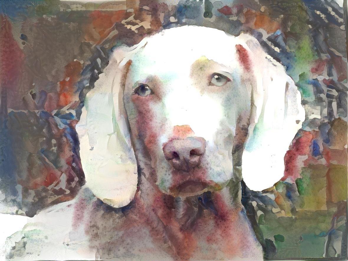Dog_4502