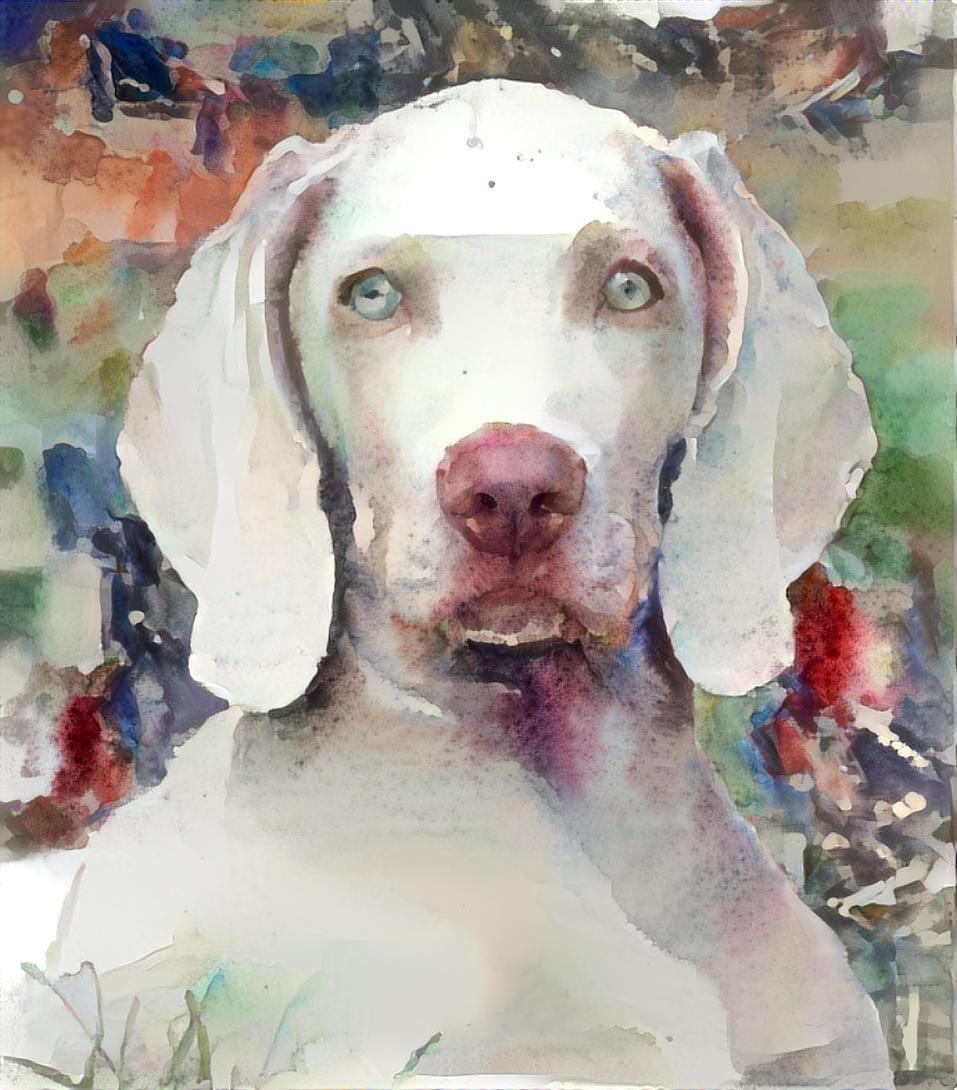 Dog_4503