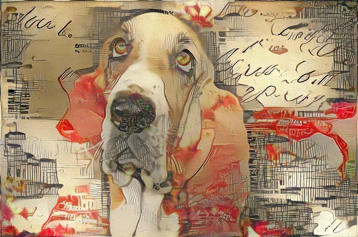 Dog_4509