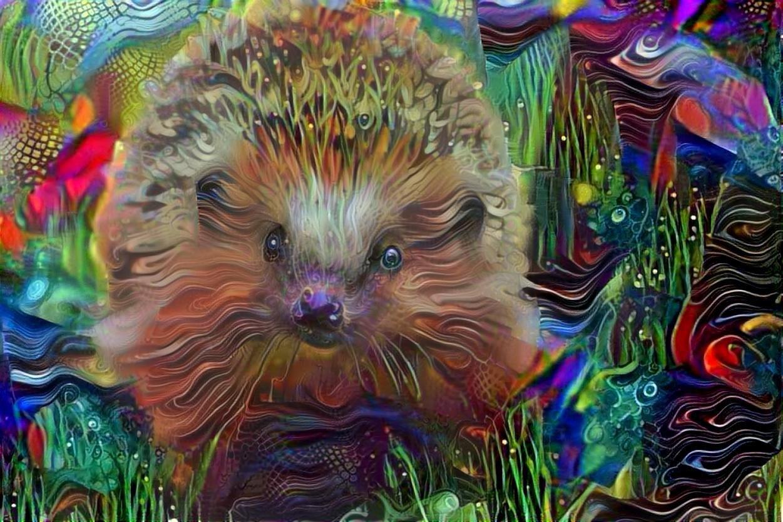 Hedgehog _4513