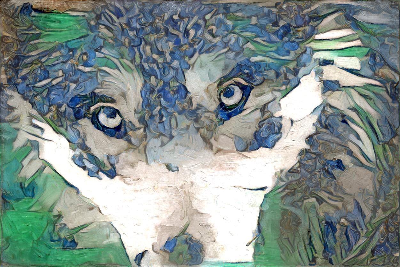 Wolf_4528