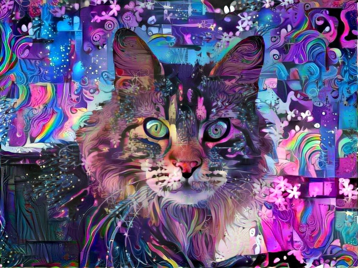 Cat_4537