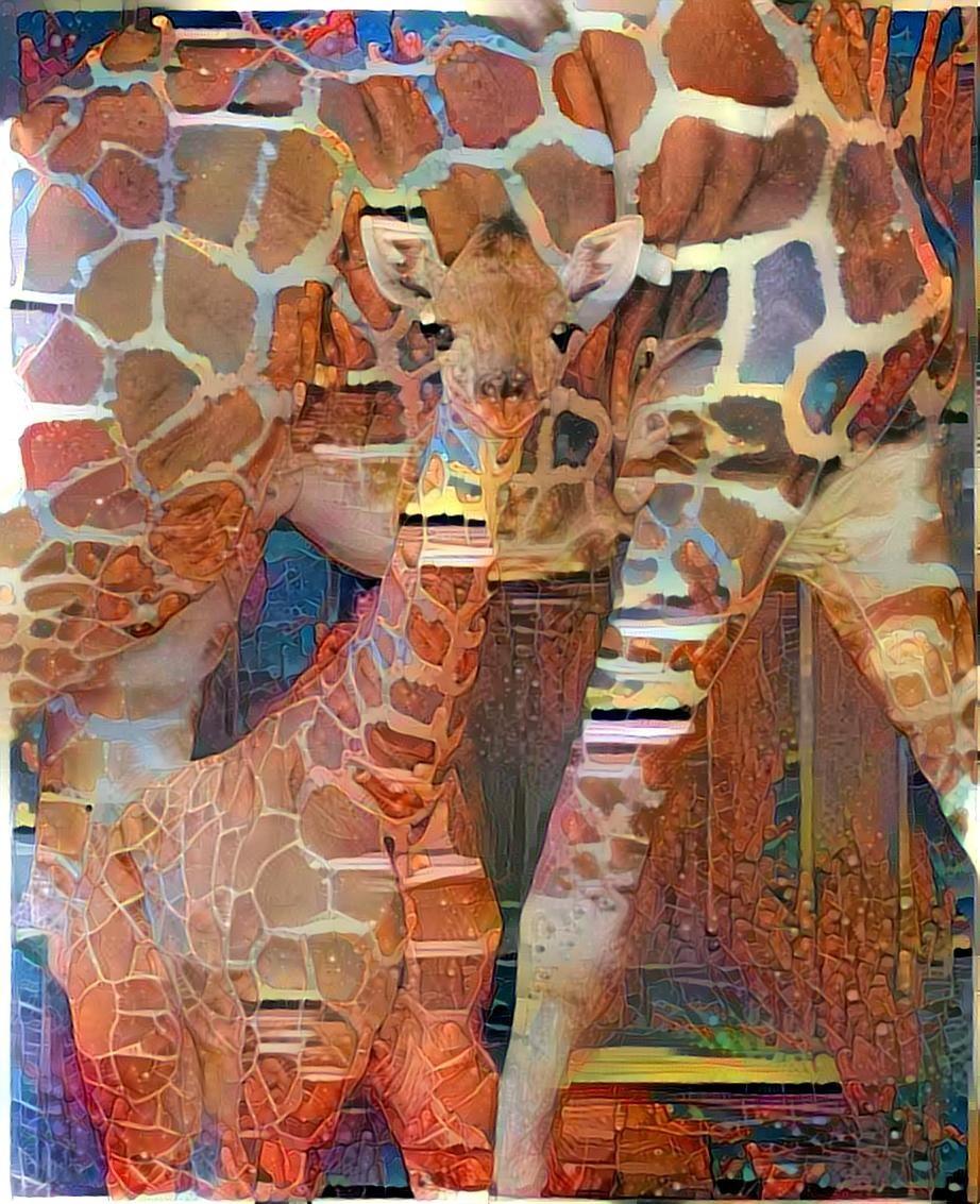 Giraffe _4562