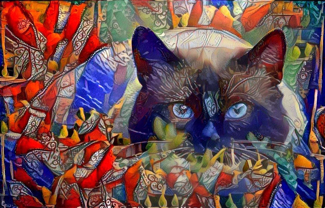 Cat_4622