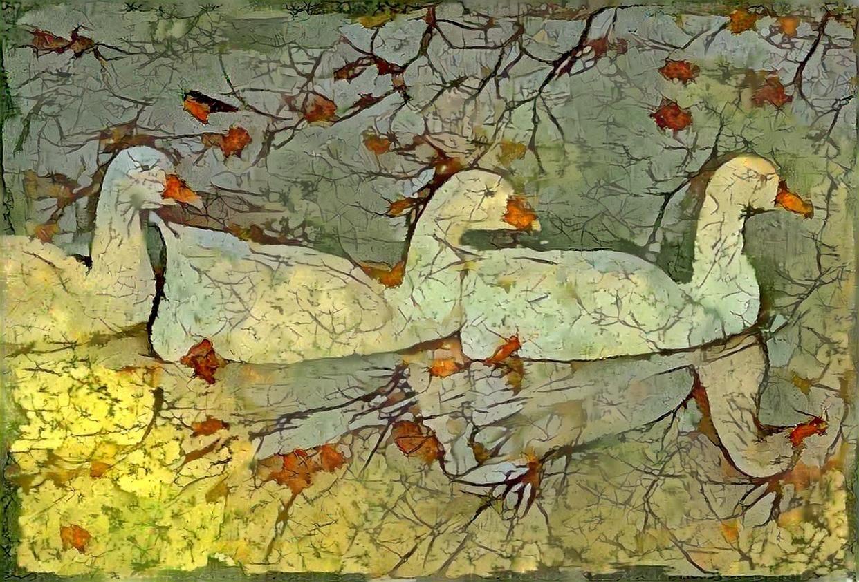 Ducks_4623