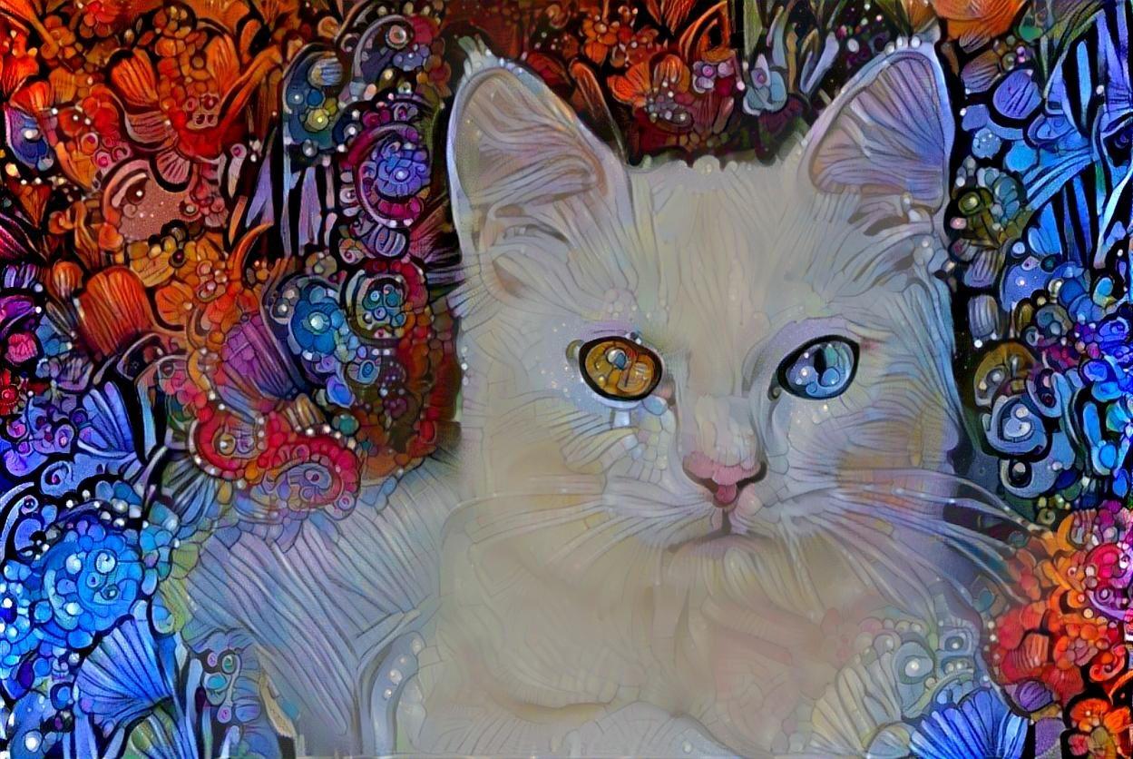 Cat _4632