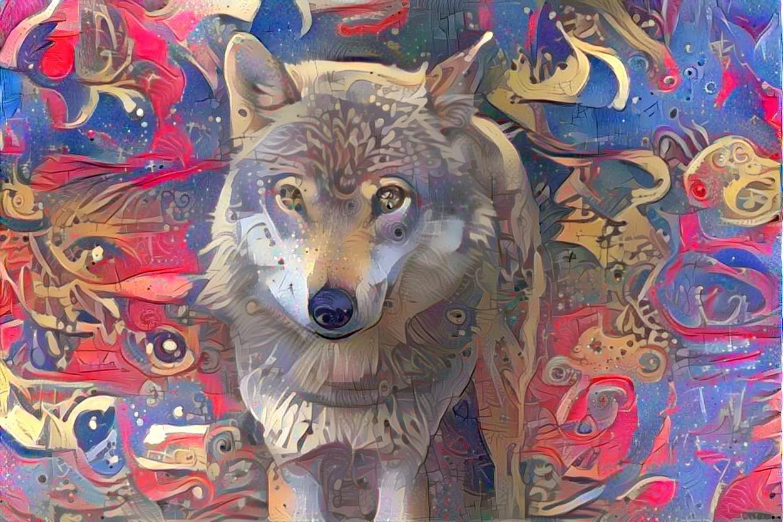Wolf_4637