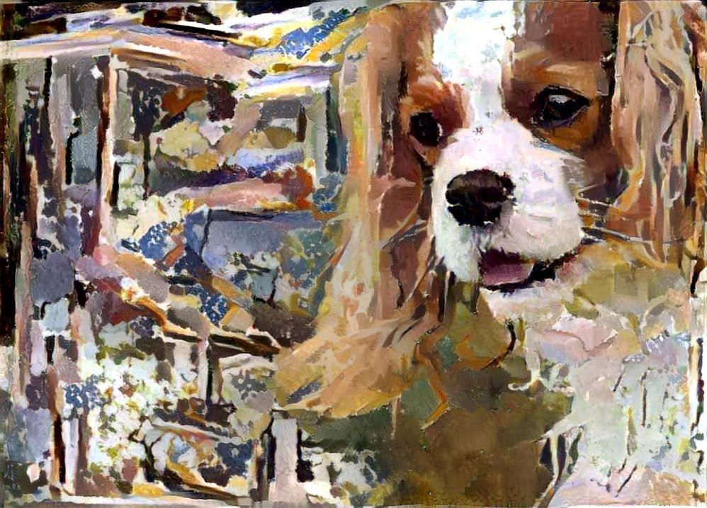 Dog_4649
