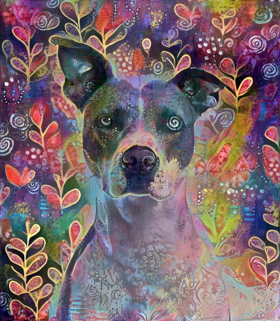 Dog_4650