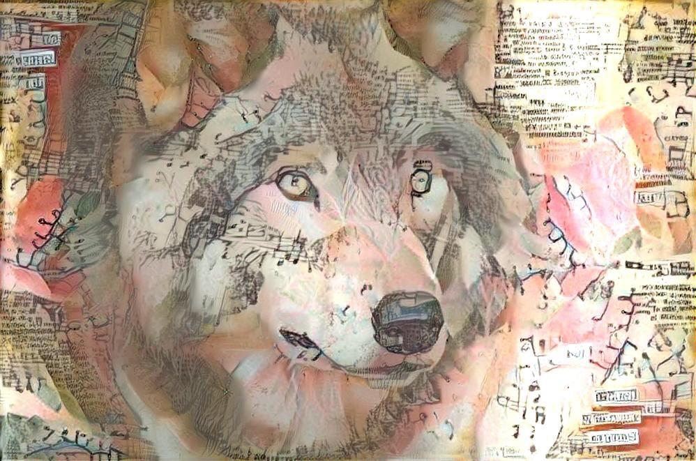 Wolf_4653