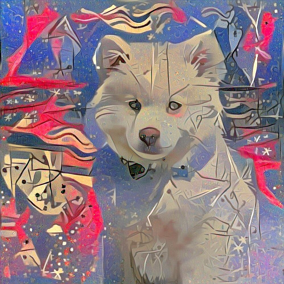 Dog_4661