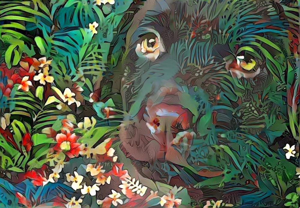 Dog_4662