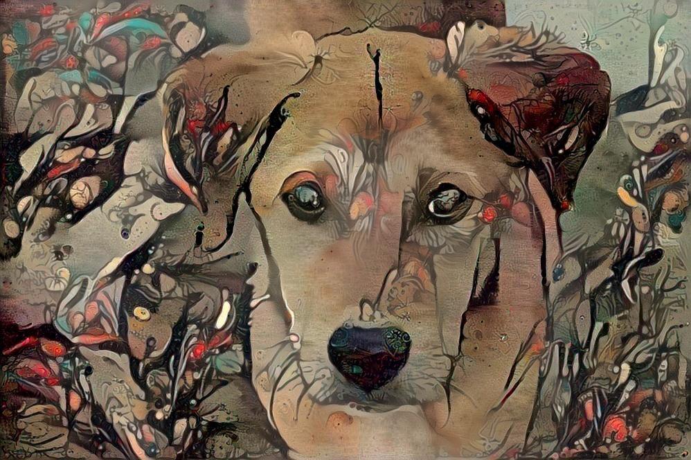Dog_4663