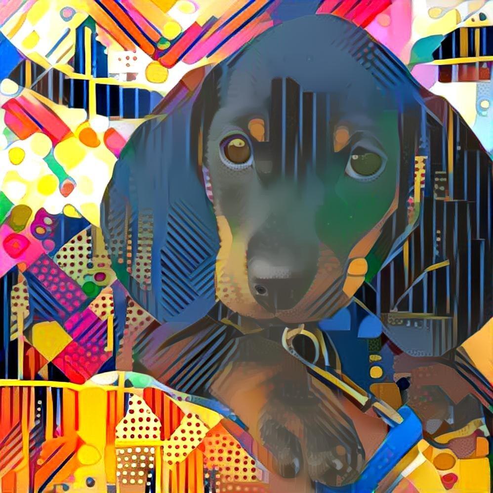 Dog_4673