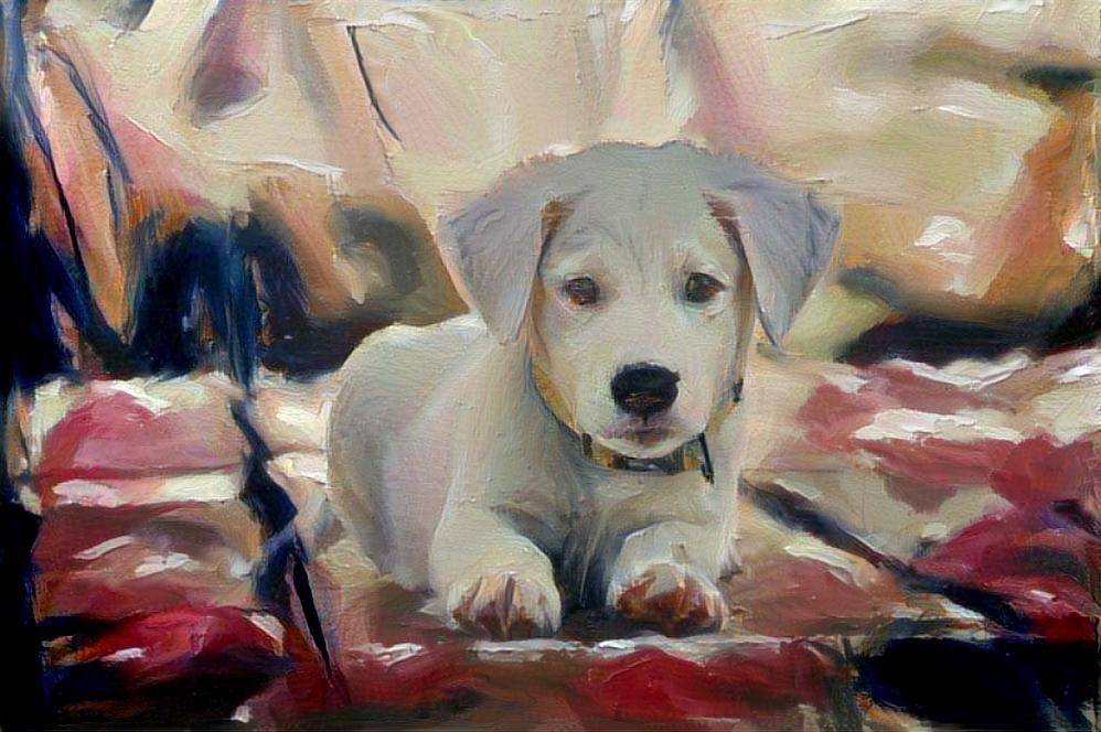 Dog_4677