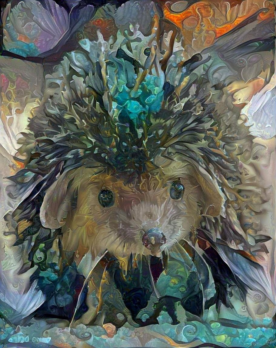 Hedgehog _4683