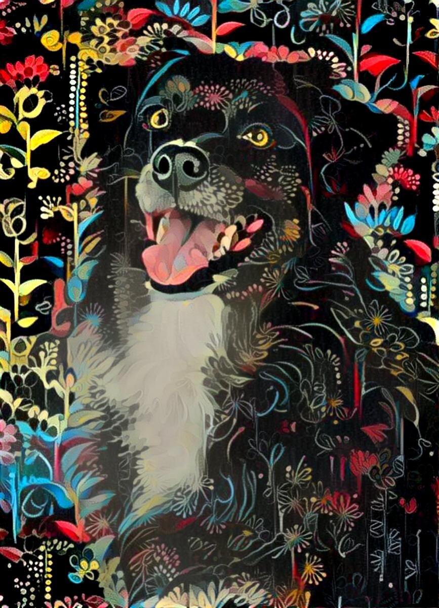 Dog_4694