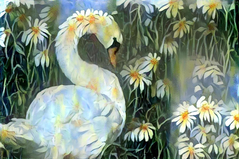 Swan_4703