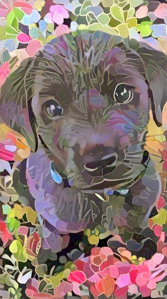 Dog_4824