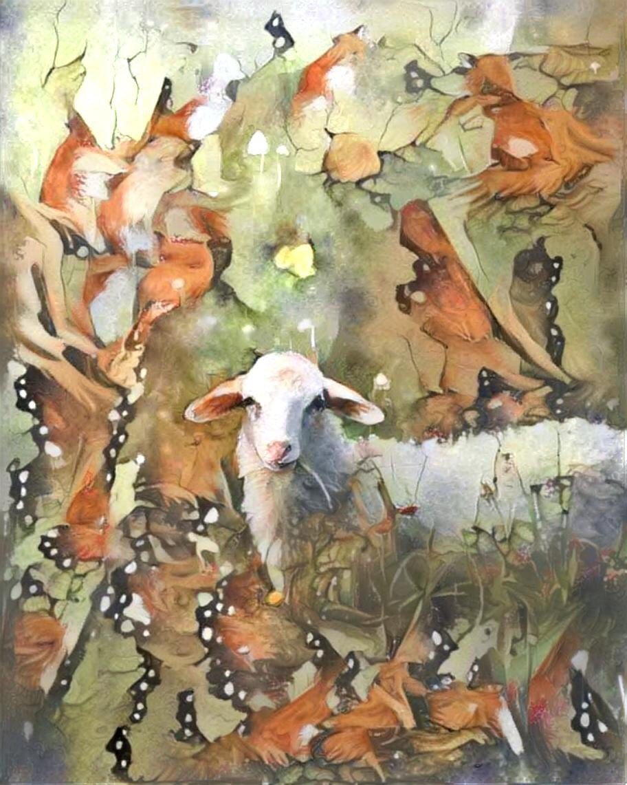 Sheep_4859