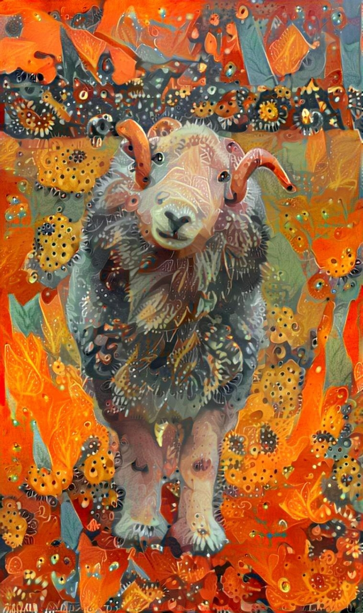 Sheep_4860