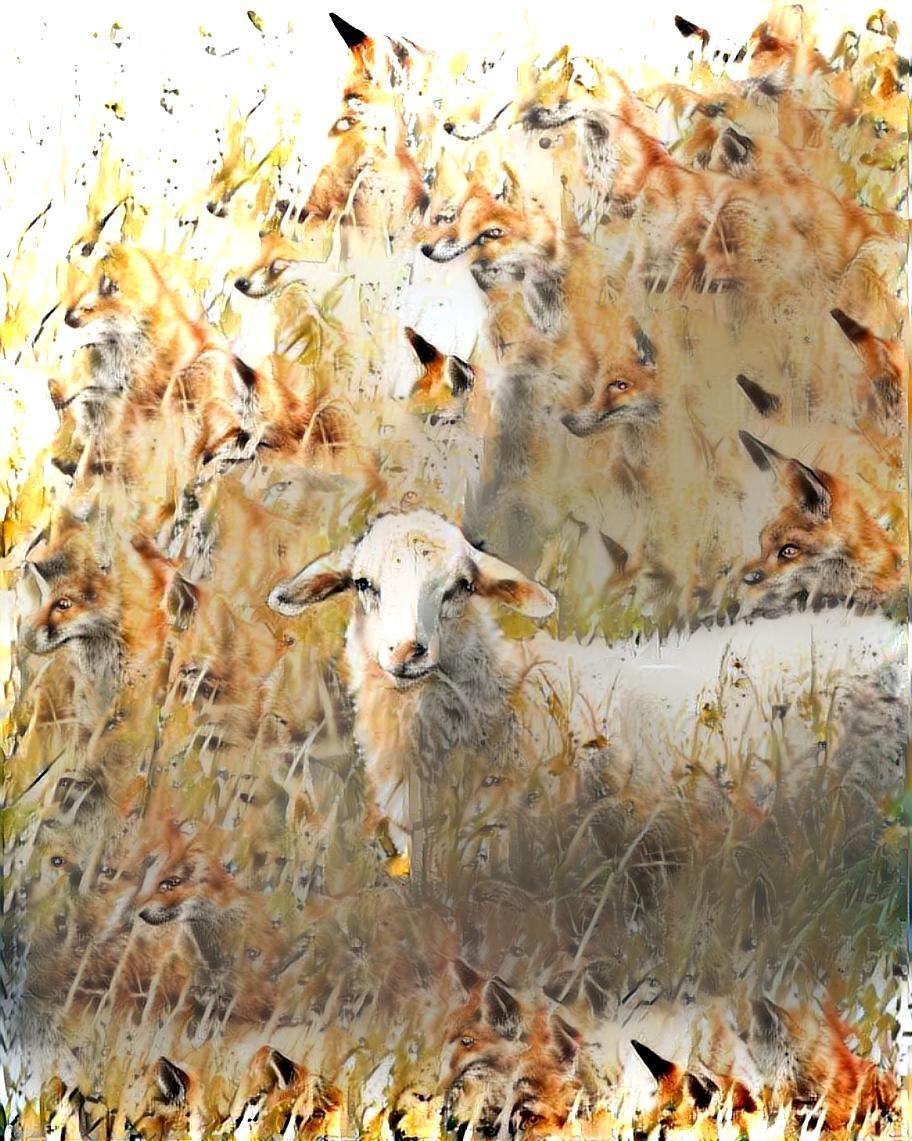 Sheep_4862