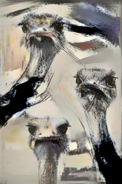 Ostrich _4870