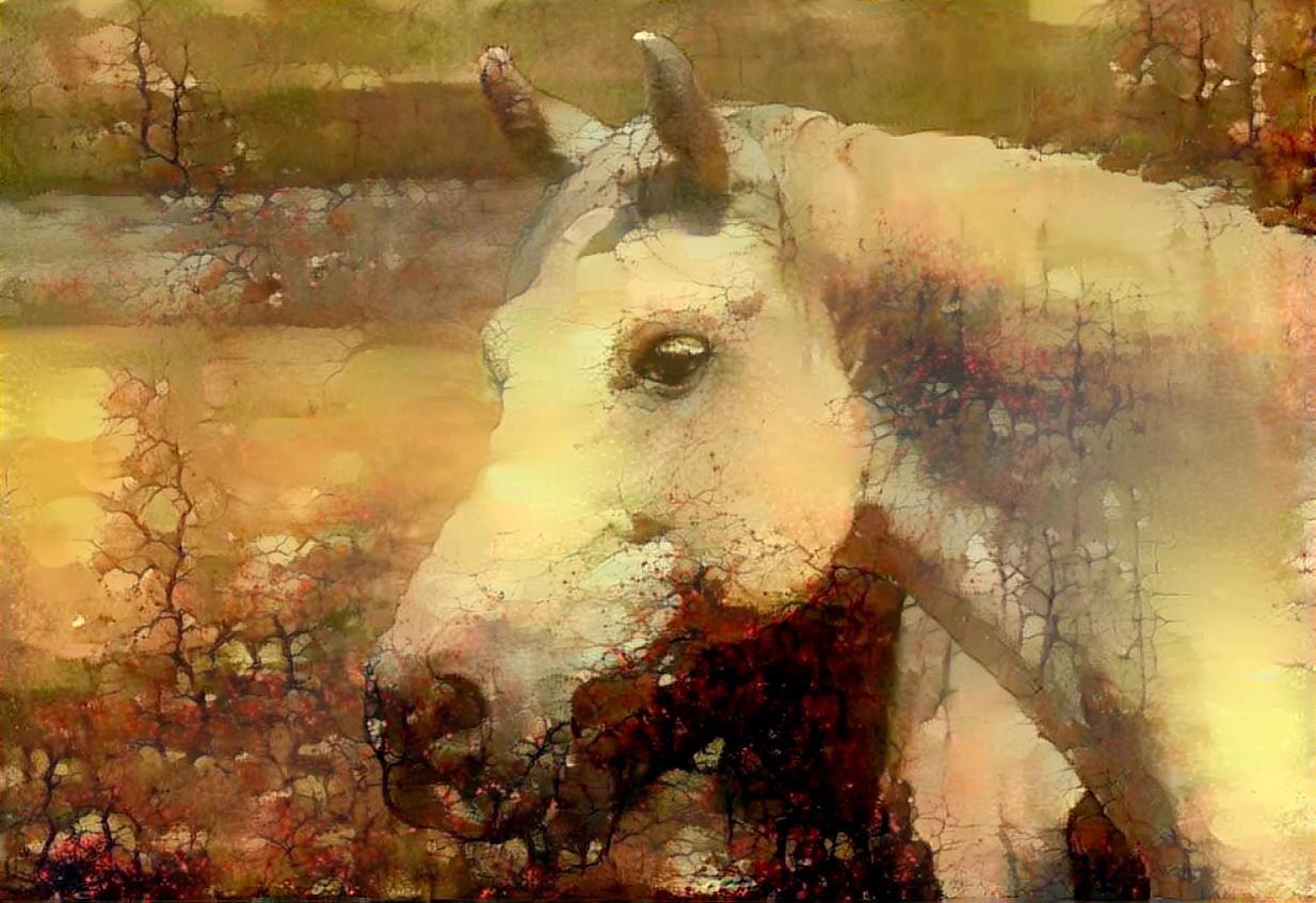 Horse_4883