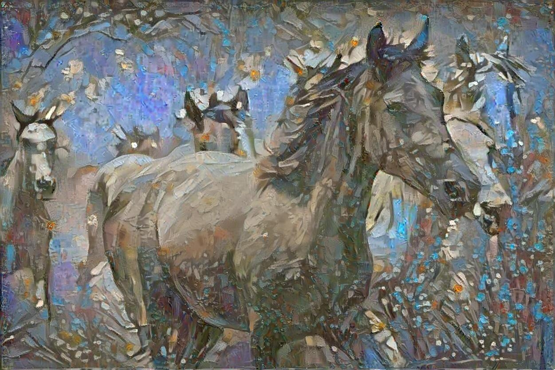 Horse_4895