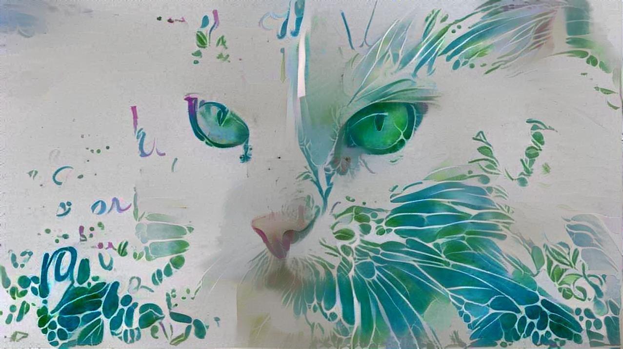 Cat_4911
