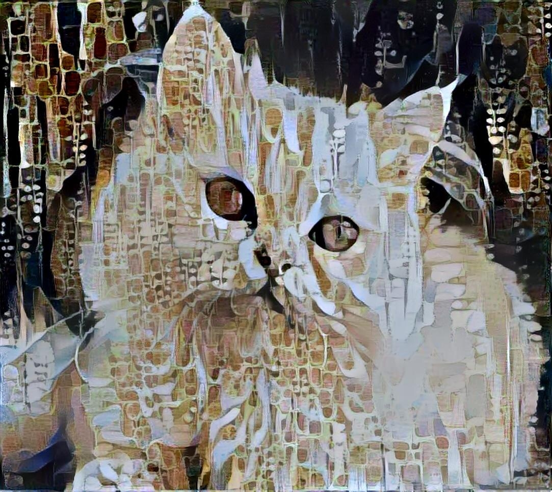 Cat _4931
