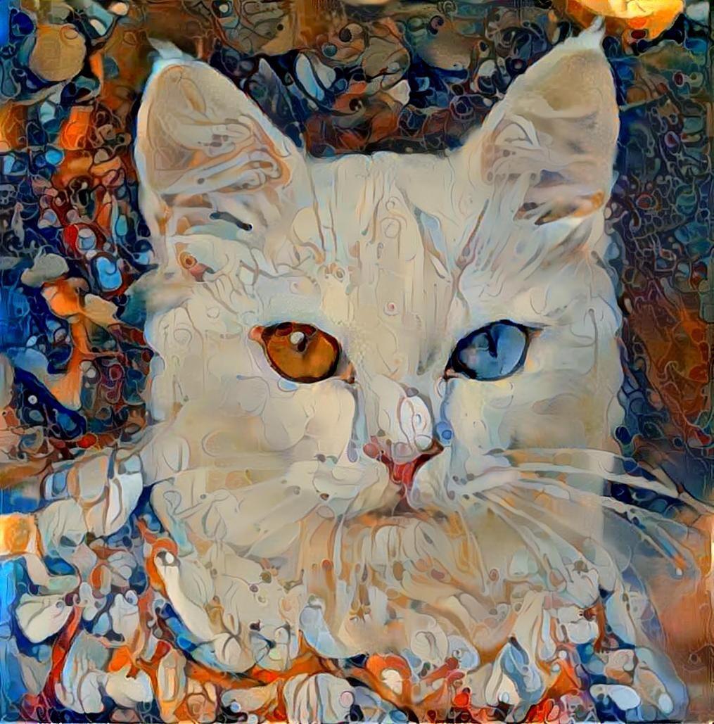 Cat_4932
