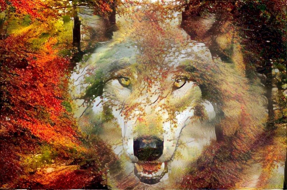 Wolf_5072