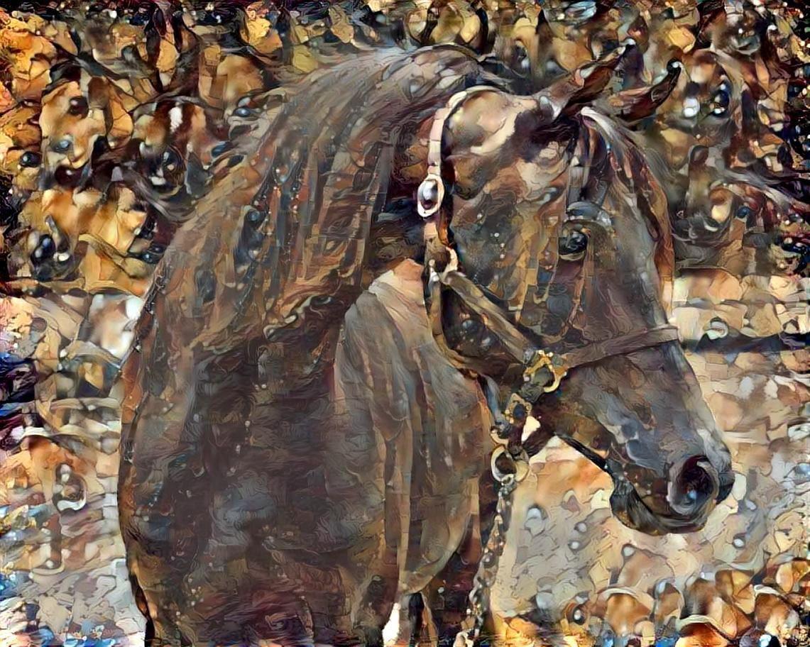 Horse_5142