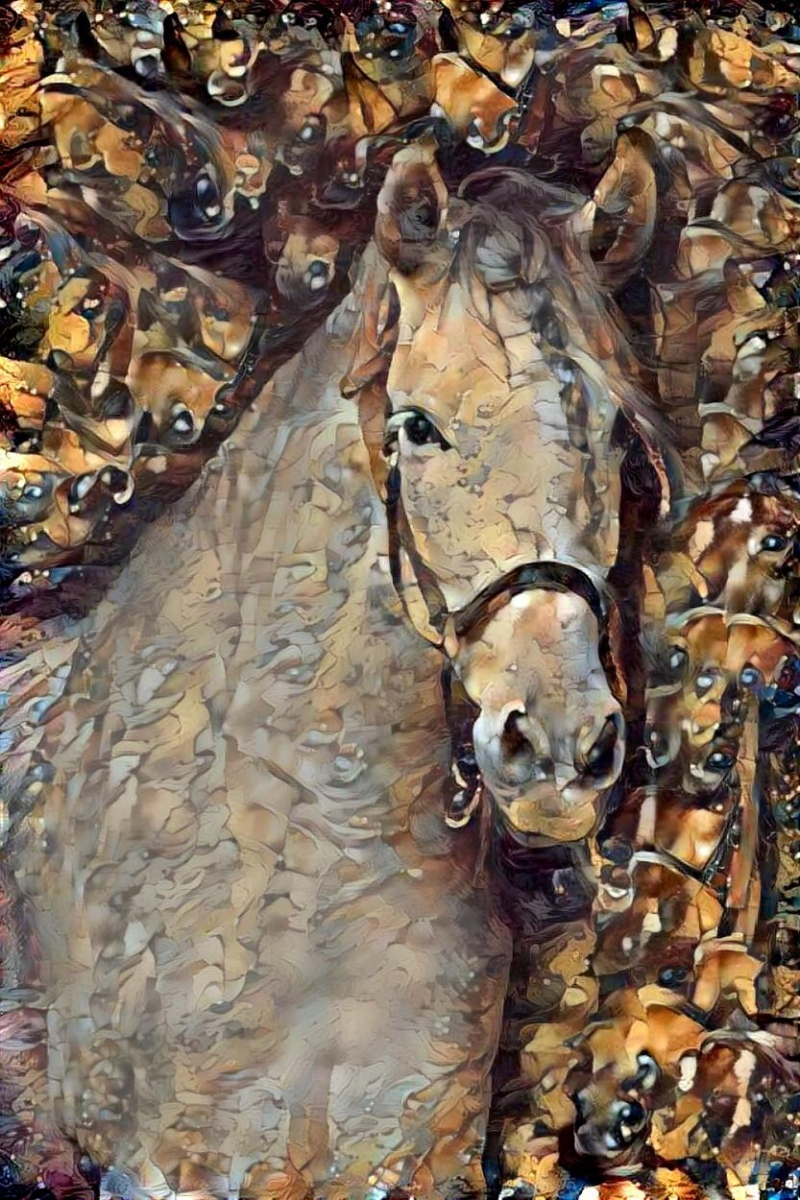 Horse_5143
