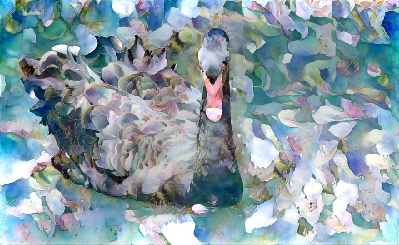 Swan_5163