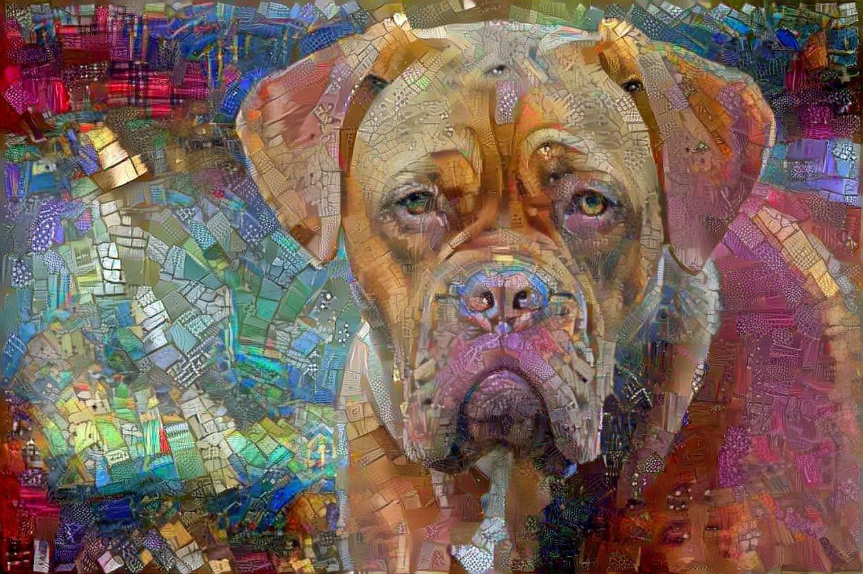 Dog_5166