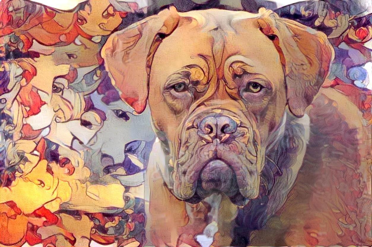 Dog_5167