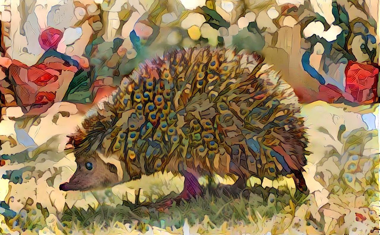 Hedgehog _5194