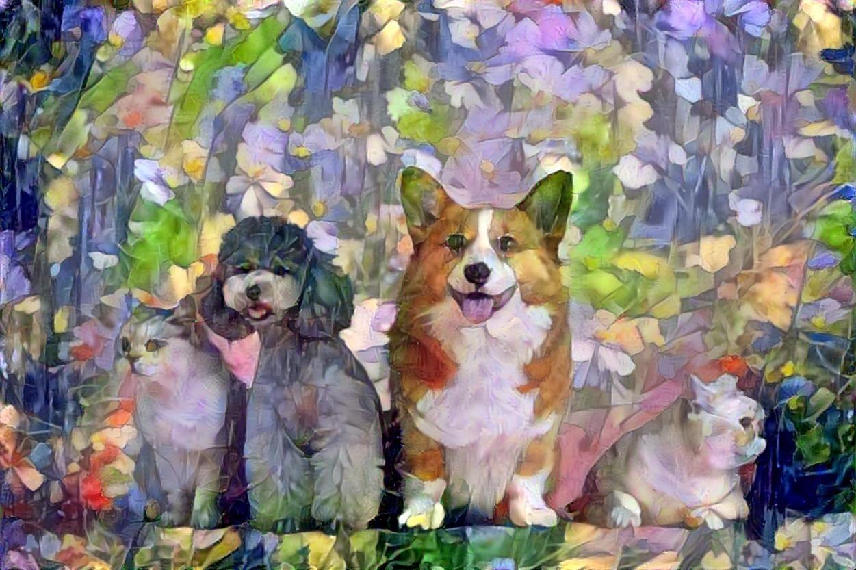 Dog_5287
