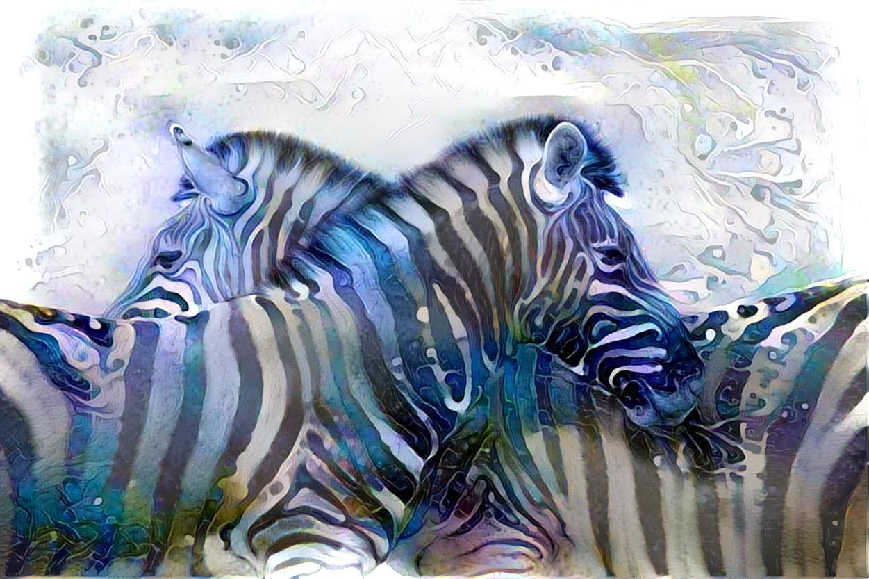 Zebra _5304
