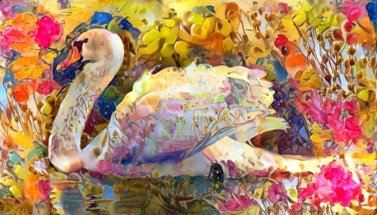 Swan_5385