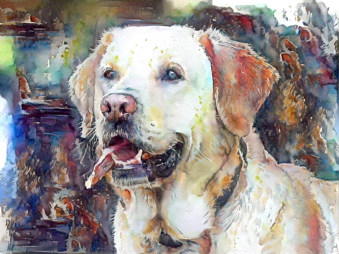 Dog_5391