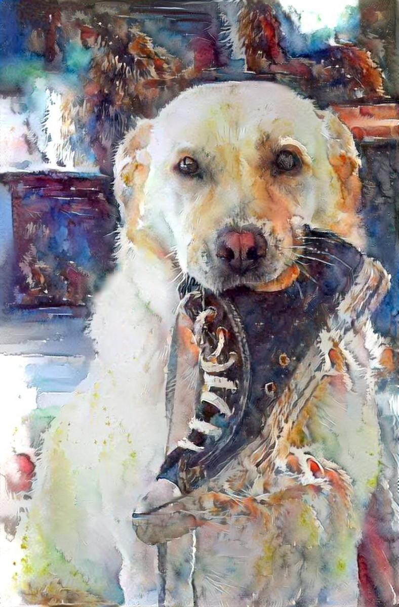Dog_5392