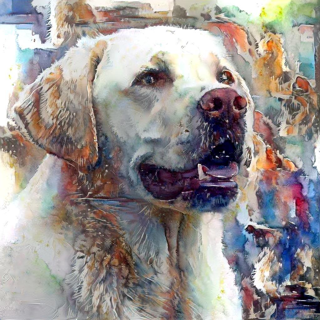 Dog_5395