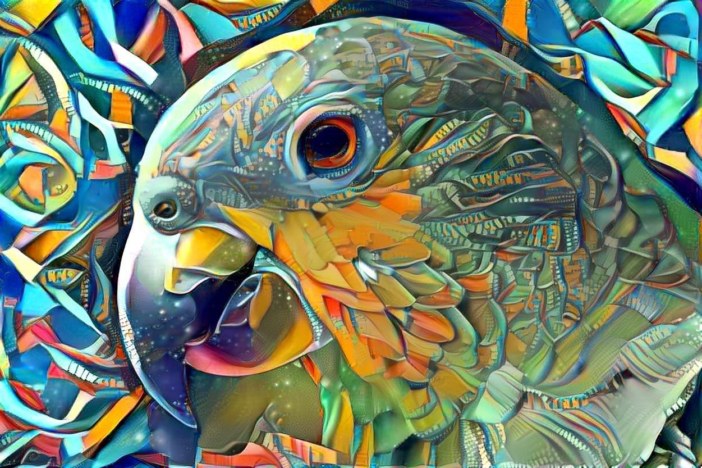 Parrot _5427