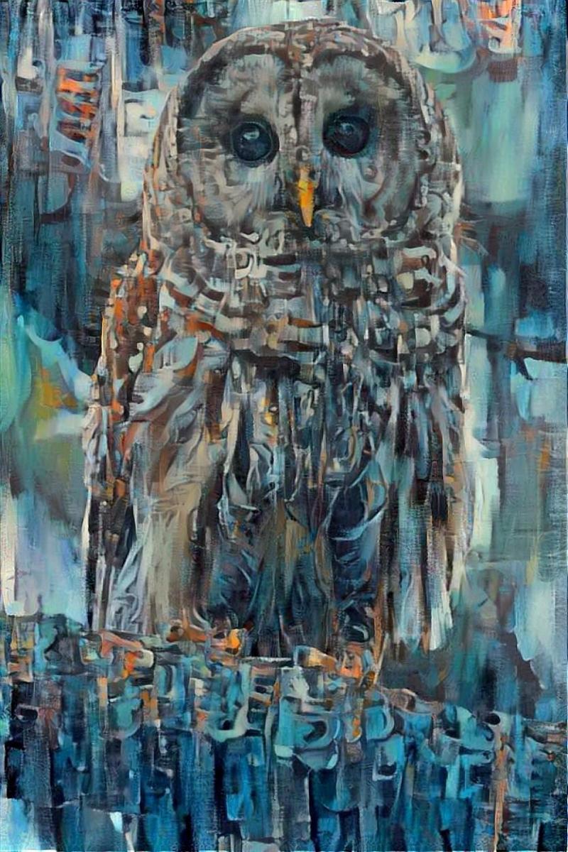 Owl _5489